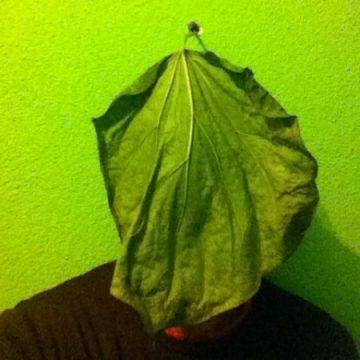 Foto del profilo di elia mauceri